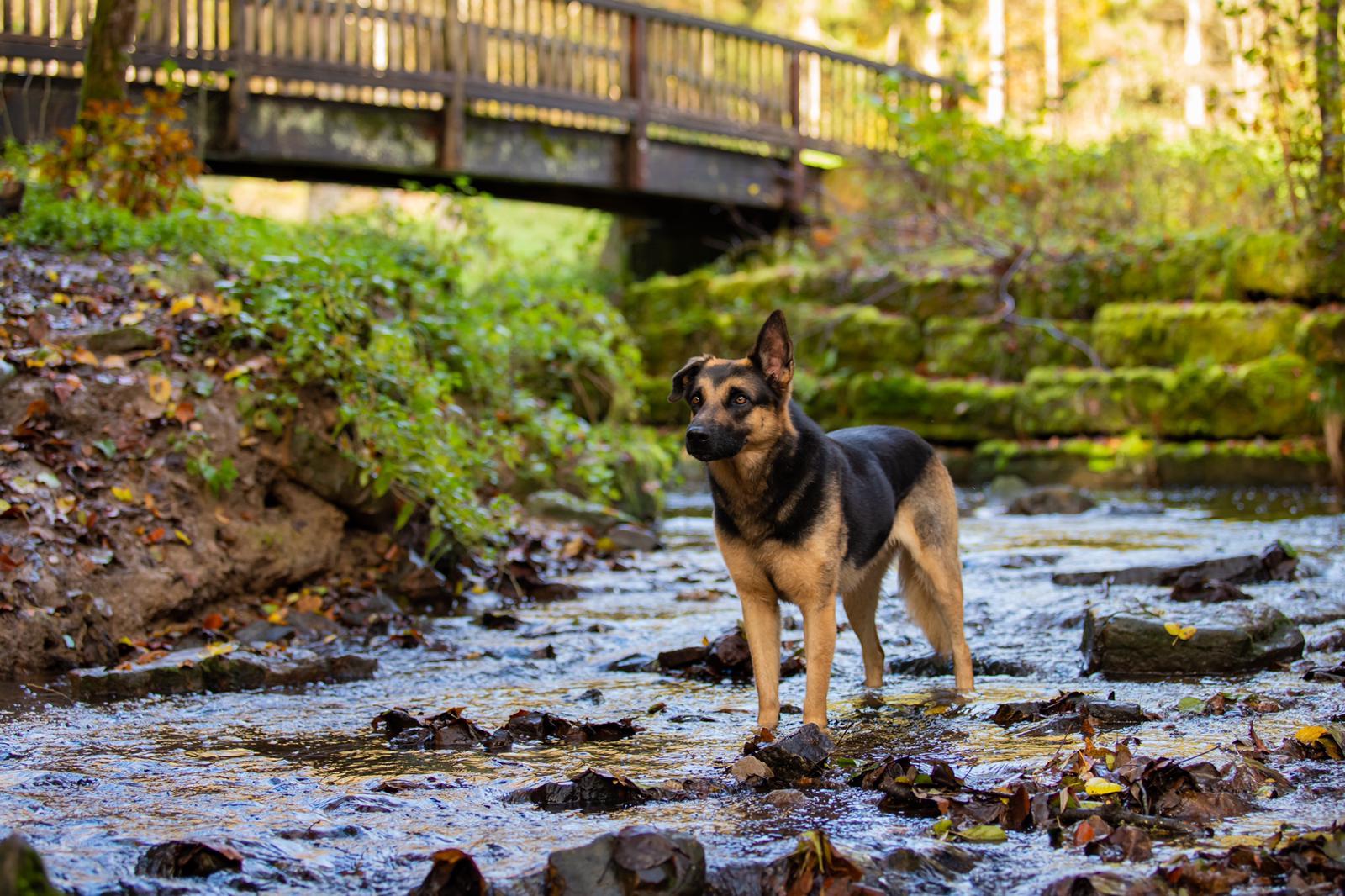 Jessica, Neuhausen mit Hund Archie